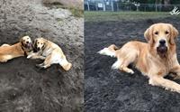 เผยเรื่องราวน่ารัก เมื่อ 2 ตูบบังเอิญพบกันที่สวนสุนัข จำกันได้ว่าเป็นพี่น้องกัน