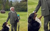 น้องหมาแย่งซีนประธานาธิบดีไอร์แลนด์ ขณะให้สัมภาษณ์สื่อ