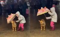 ไวรัลน่ารัก หนูน้อยกลัวหมาจรฯ เปียกฝน เดินตามกางร่มให้!