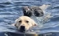 มิตรภาพต่างสายพันธุ์ เจ้าตูบว่ายน้ำพาหนูยักษ์ขึ้นฝั่ง