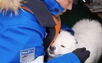 เรือตัดน้ำแข็งช่วยชีวิตตูบหลงทางในอาร์กติกนาน 1 สัปดาห์