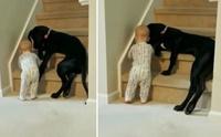 ไวรัลน่ารัก! พี่หมานั่งขวางบันได ห้ามน้องไม่ให้ปีนขึ้น