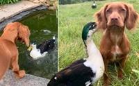 คู่ซี้ต่างพันธุ์ น้องหมาเป็นเพื่อนกับเป็ดแสนน่ารัก