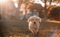 แก๊งขโมยลูกสุนัขเตือนเจ้าของให้ดูสุนัขให้ดี