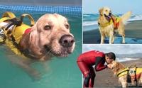 โกลเด้นฯ อาสาสมัครฝึกเป็นน้องหมากู้ภัยช่วยชีวิตคนตกน้ำ!