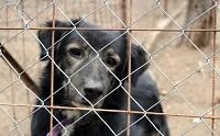 สุดช็อค พบหมาตัวเองหลังจากหายไป 2 ปี