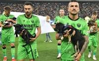 16 นักฟุตบอลโรมาเนียอุ้มลูกหมาไร้บ้านลงสนาม หวังช่วยหาบ้านให้!
