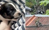 รอดแล้ว! ลิงในมาเลเซียจับลูกหมาเป็นตัวประกัน 3 วัน