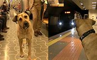 เซเลปตูบประจำสถานีรถไฟตุรกี ได้ขึ้นฟรีแถมมีแฟนคลับ!