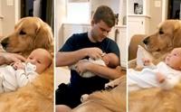 ไวรัลอบอุ่น! ทารกชอบอ้อมกอดพี่หมามากกว่าคุณพ่อแท้ๆ