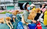 เวียดนามเดือด! 12 สุนัขถูกฆ่าเพราะกลัวแพร่เชื้อโควิด-19
