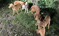 ทิ้งได้ลงคอ! พบกลุ่มลูกสุนัขลาบราดอร์ถูกทอดทิ้งกลางอุทยาน