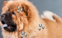 7 สิ่งน่ากลัว เมื่อสุนัขอ้วน (2)