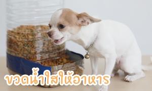 D.I.Y Dog Feeder ขวดน้ำใสให้อาหาร ทำง่ายใน 5 นาที