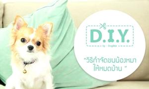 D.I.Y วิธีกำจัดขนน้องหมาให้หมดบ้าน