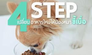 D.I.Y 4 Step ง่าย ๆ เปลี่ยนอาหารใหม่ให้น้องหมาขี้เบื่อ