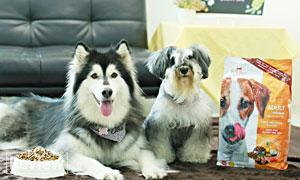 เคล็ด[ไม่]ลับให้น้องหมาขนสวย ด้วยอาหารสุนัขเกรดพรีเมียม Dog Days สูตรเนื้อแกะและข้าว