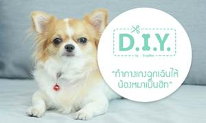 D.I.Y. ทำกางเกงฉุกเฉินให้น้องหมาเป็นฮีท