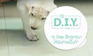 D.I.Y. 4 Step ง่ายๆ ฝึกลูกหมาให้ขับถ่ายเป็นที่