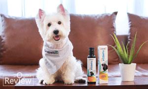 ดูแลผิวหนังและเส้นขนน้องหมาให้แข็งแรงอย่างเป็นธรรมชาติด้วย YuMEGA Dog Essential Omega Oils