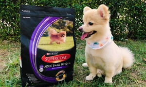 Review อาหารสุนัข SUPERCOAT ซุปเปอร์โค้ทดูแลได้ !!