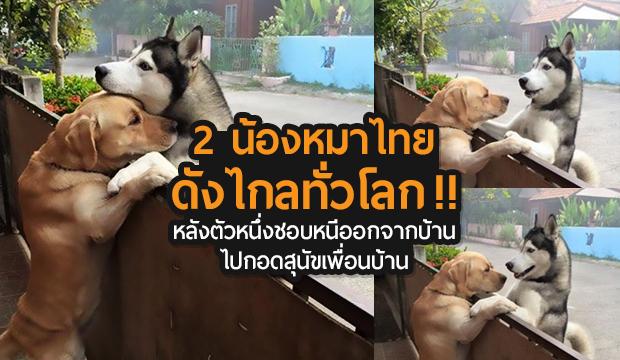 รู้จักกันหรือยัง 2 น้องหมาไทยดังไกลทั่วโลก !