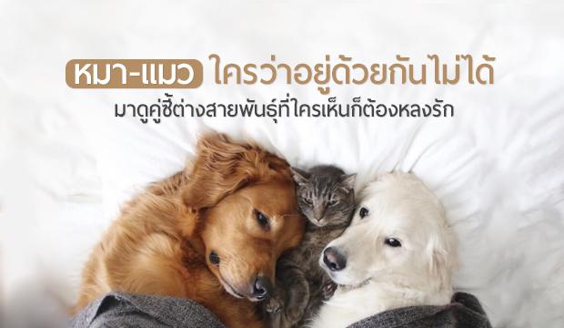 หมาแมวใครว่าอยู่ด้วยกันไม่ได้ ...