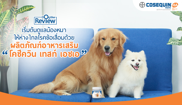 เริ่มต้นดูแลน้องหมาให้ห่างไกลโรคข้อเสื่อมด้วย ผลิตภัณฑ์อาหารเสริม