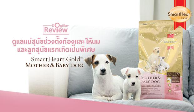 ดูแลแม่สุนัขช่วงตั้งท้องและให้นม และลูกสุนัขแรกเกิดเป็นพิเศษ
