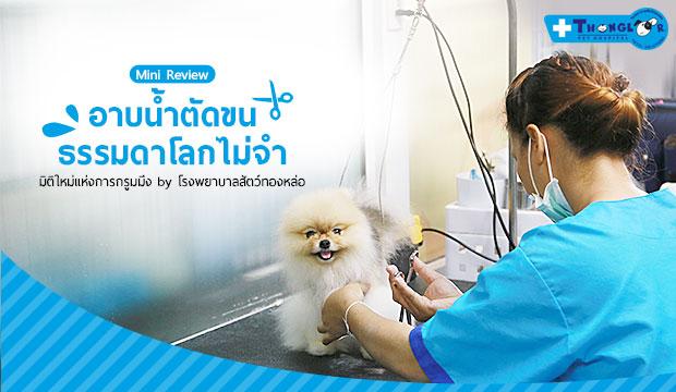 อาบน้ำตัดขนธรรมดาโลกไม่จำ มิติใหม่แห่งการอาบน้ำตัดขน by โรงพยาบาลสัตว์ทองหล่อ