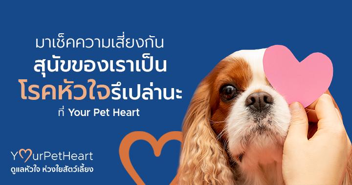 มาเช็คความเสี่ยงกัน สุนัขของเราเป็นโรคหัวใจรึเปล่านะ